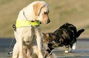 什么品种的狗可以和猫一起养?