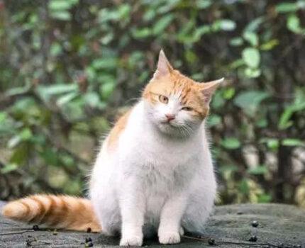 流浪橘猫,和三花猫的爱情故事,它还在等它,可它再也不会回来了