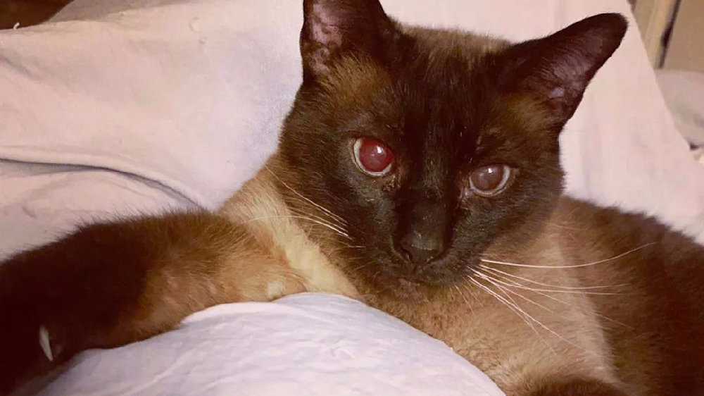 网友领养的老猫太自闭,询问原因后,原来是缺个伴,网友立马再领养一